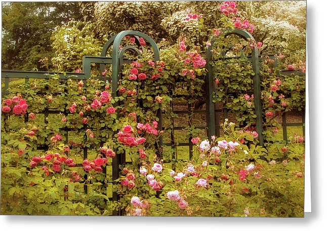 Rose Trellis  Greeting Card