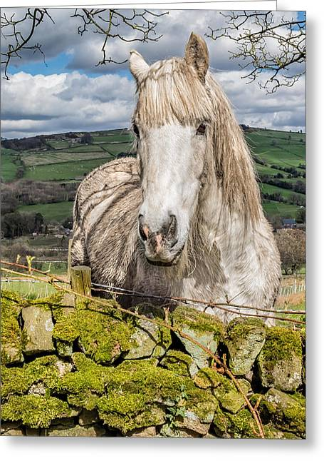 Greeting Card featuring the photograph Rustic Horse by Nick Bywater