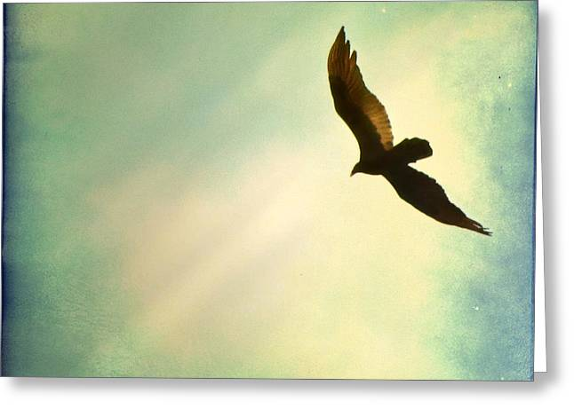 Hawk Bird Greeting Cards - Soaring Greeting Card by Amy Tyler