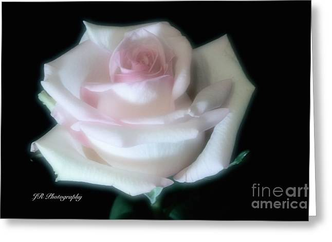 Soft Pink Rose Bud Greeting Card by Jeannie Rhode