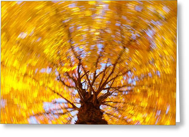 Greeting Card featuring the photograph Spinning Maple by Bernhart Hochleitner
