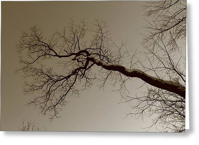 Spooky Gnarly Forest Greeting Card by Frank Romeo
