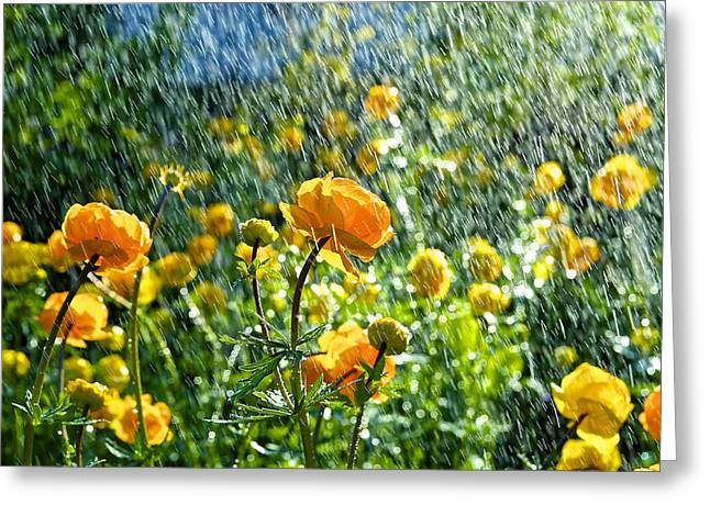 Spring Flowers In The Rain Greeting Card