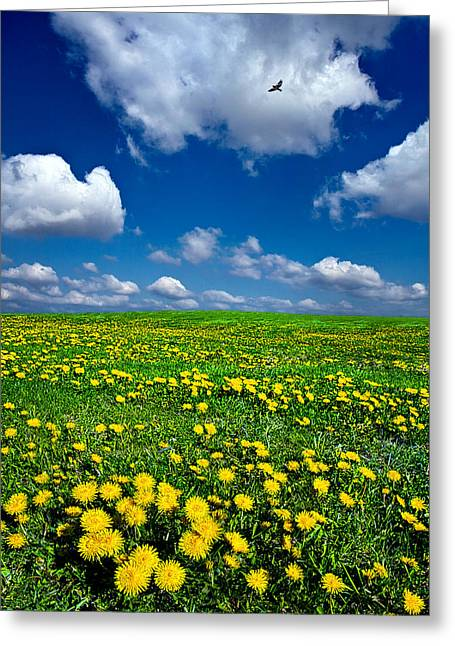 Phil Koch Greeting Cards - Spring Greeting Card by Phil Koch