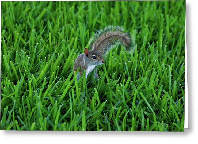 Greeting Card featuring the photograph 2- Squirrel by Joseph Keane