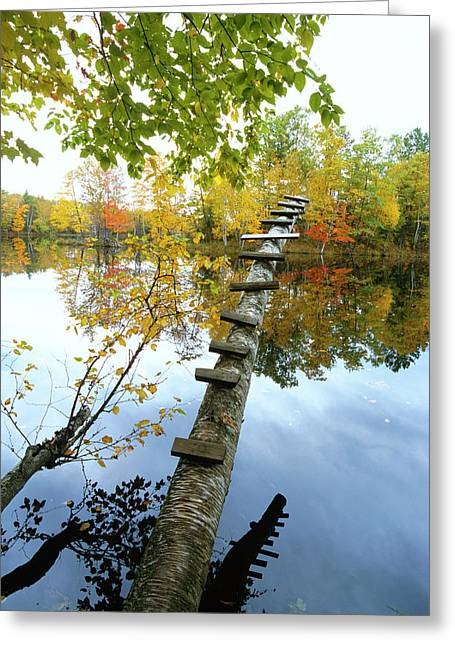 Stepping Tree - Northwoods Wisconsin Greeting Card