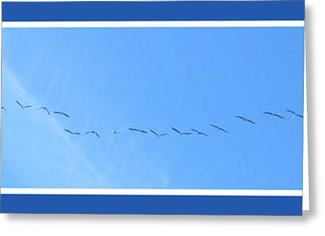 String Of Birds In Blue Greeting Card