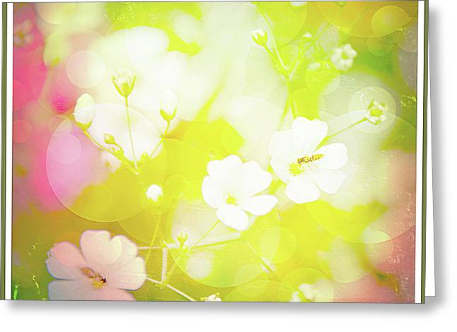 Summer Flowers, Baby's Breath, Digital Art Greeting Card