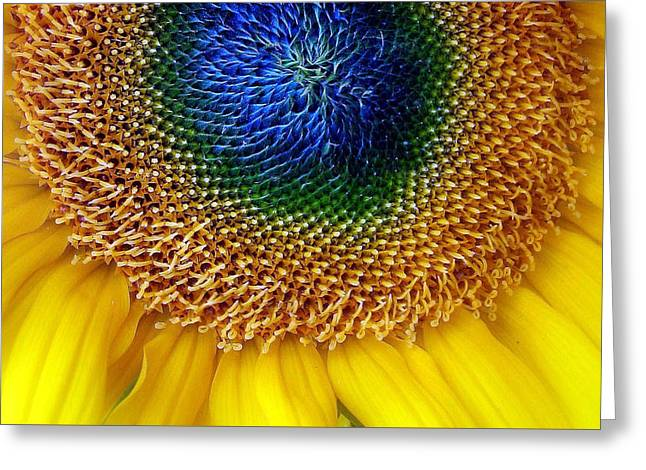 Sunflower Greeting Card by Jessica Jenney