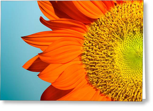 Sunflowers Greeting Card by Mark Ashkenazi
