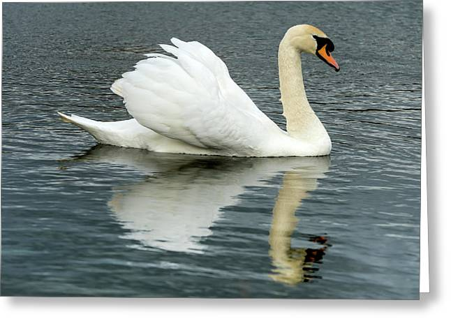 Greeting Card featuring the photograph Swan by Cliff Norton