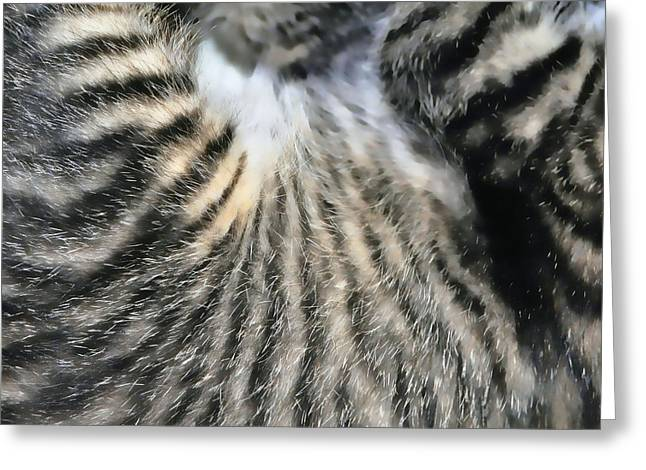 Tabby Texture Greeting Card by JAMART Photography