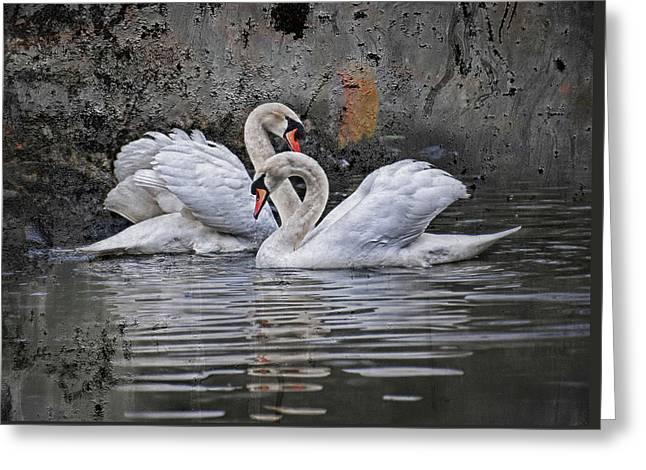 Tango Of The Swans Greeting Card by Joachim G Pinkawa