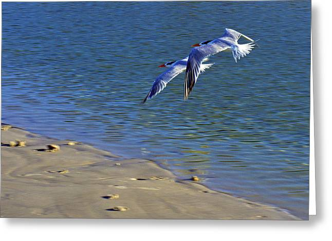 2 Terns In Flight Greeting Card