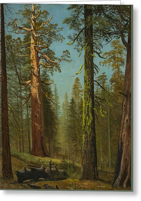 The Grizzly Giant Sequoia, Mariposa Grove, California Greeting Card