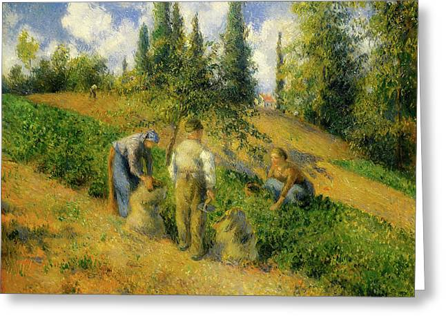 The Harvest, Pontoise Greeting Card by Camille Pissarro