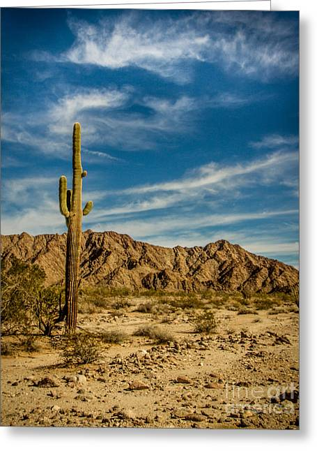 The Saguaro Greeting Card by Robert Bales