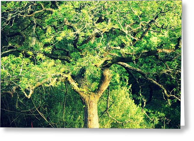 The Tree Greeting Card by Frances Lewis