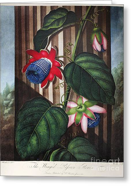 Thornton: Passion-flower Greeting Card
