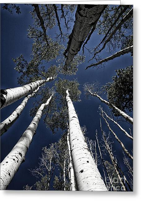 Soaring Tower Greeting Cards - Towering Aspens Greeting Card by Timothy Johnson