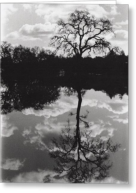Tree Reflection Sebastopol Ca, Greeting Card