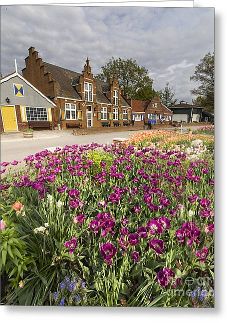 Tulips In Holland Greeting Card by Twenty Two North Photography