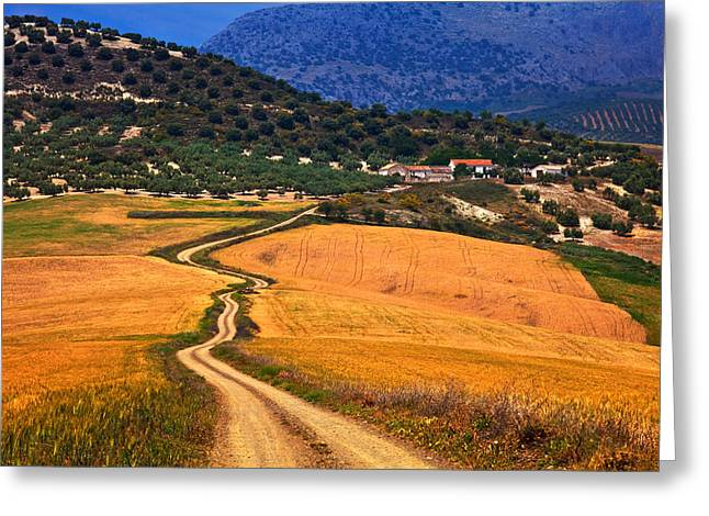 Twisty Road, Near Casabermeja, Malaga Greeting Card by Panoramic Images