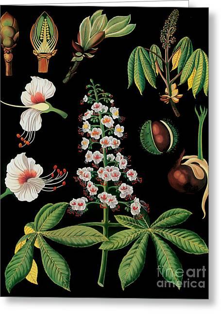 Vintage Botanical Greeting Card