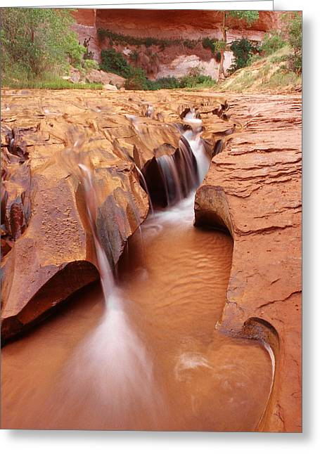 Coyote Gulch Greeting Cards - Water in the Desert Greeting Card by Utah Images