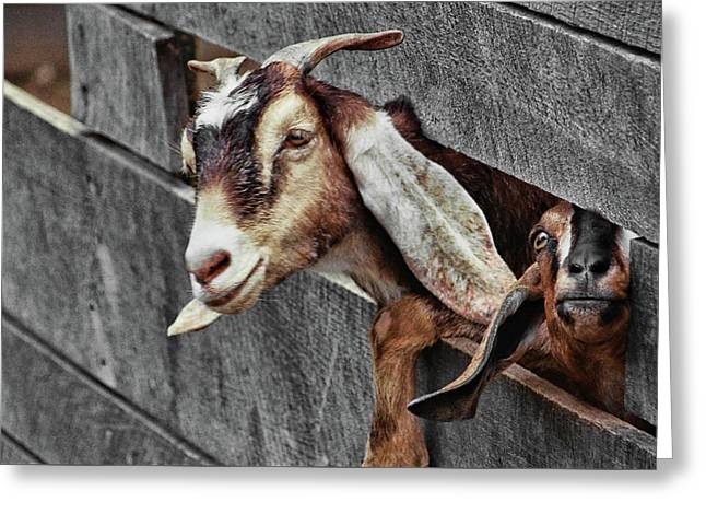What's Going On? Greeting Card by JAMART Photography