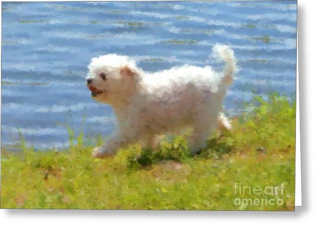 White Little Dog Greeting Card