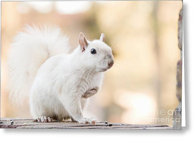 White Squirrel Greeting Card by Vizual Studio
