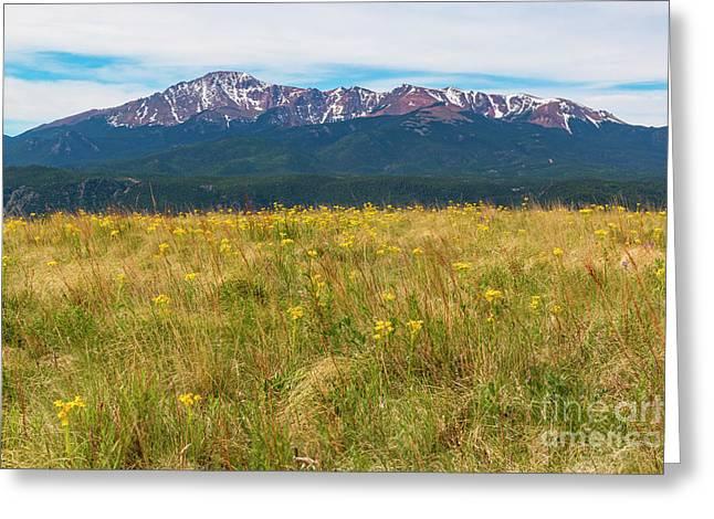 Wildflowers And Pikes Peak Greeting Card