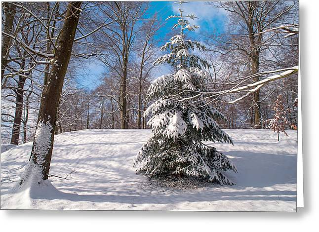 Winter Delight Greeting Card by Jenny Rainbow