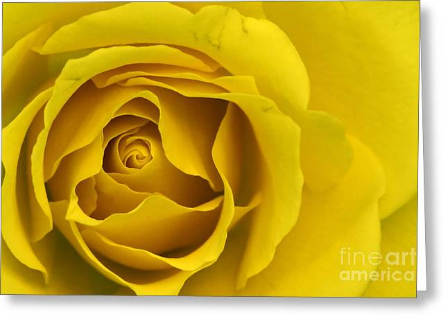 Greeting Card featuring the photograph Yellow Rose by Adrian LaRoque
