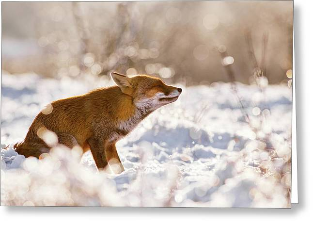 Zen Fox Series -zen Fox In The Snow Greeting Card by Roeselien Raimond