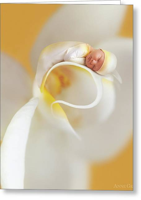 Nate On A Moth Orchid  Greeting Card