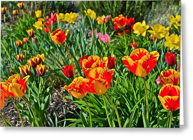 2015 Acewood Tulips 1 Greeting Card
