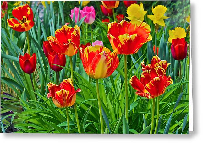 2015 Acewood Tulips 6 Greeting Card by Janis Nussbaum Senungetuk