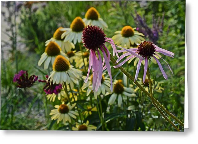 2015 Summer At The Garden Coneflowers Greeting Card