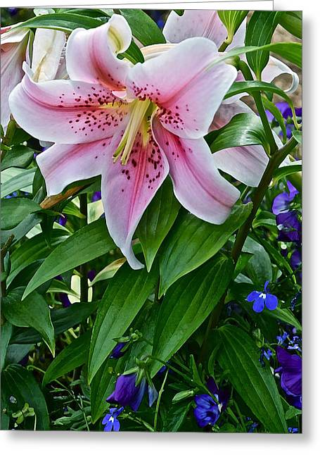 2015 Summer At The Garden Event Garden Lily 3 Greeting Card