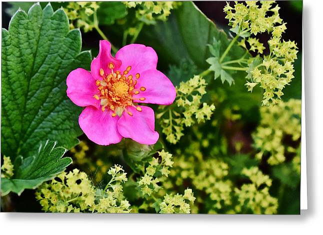 2015 Summer's Eve At The Garden Lipstick Strawberry Greeting Card