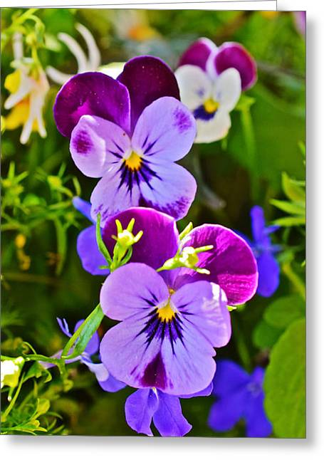 2015 Summer's Eve At The Garden Pansy Totem Greeting Card