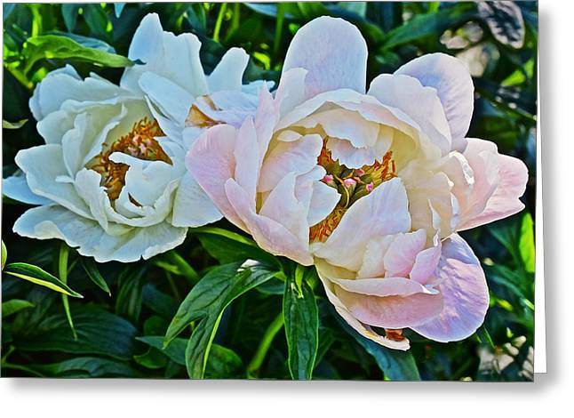 2015 Summer's Eve At The Garden White Peony Duo Greeting Card