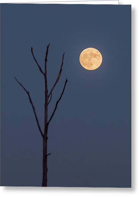2016 November Supermoon Minimalist Nj Greeting Card by Terry DeLuco