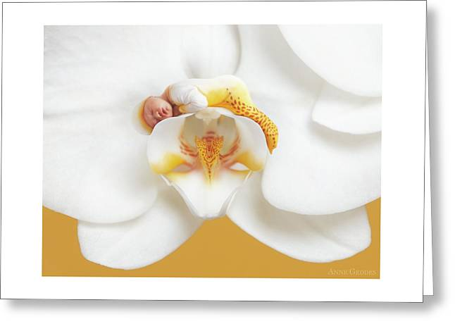 Mia In A Moth Orchid Greeting Card