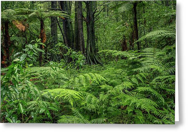 Greeting Card featuring the photograph Jungle by Les Cunliffe