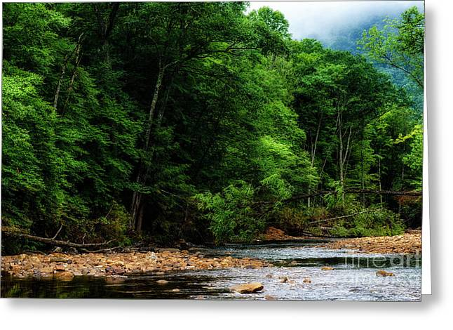 Williams River Summer Greeting Card