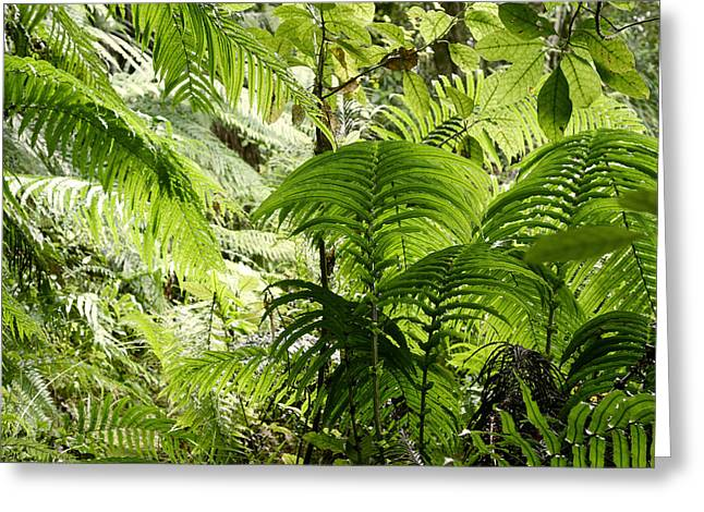 Jungle Leaves Greeting Card by Les Cunliffe