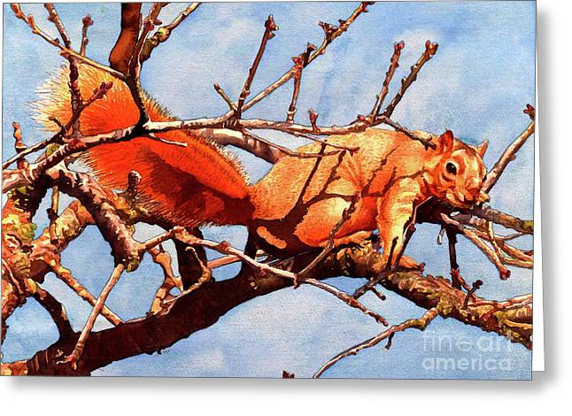 #251 Fox Squirrel Greeting Card by William Lum